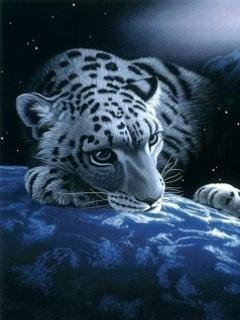 Space Tiger Mobile Wallpaper