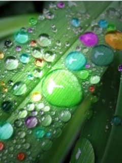 Color Drops Mobile Wallpaper