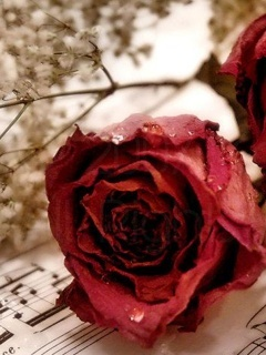 Rose And Music Note Mobile Wallpaper