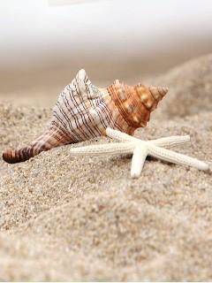 Sea Shells Mobile Wallpaper