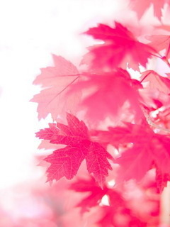 Pink Leafs Mobile Wallpaper