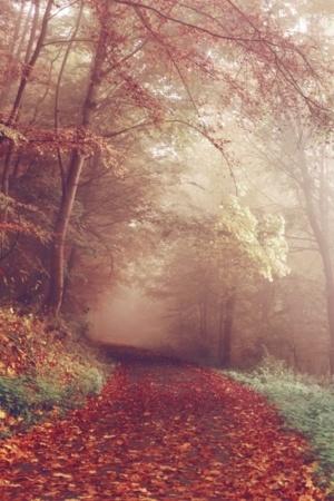 Morning Fog Autumn Nature Scenery Leaves Mobile Wallpaper
