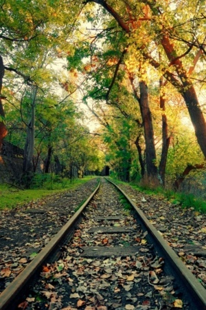 Train Track On Jungle Naure Leaves Of Autumn Mobile Wallpaper