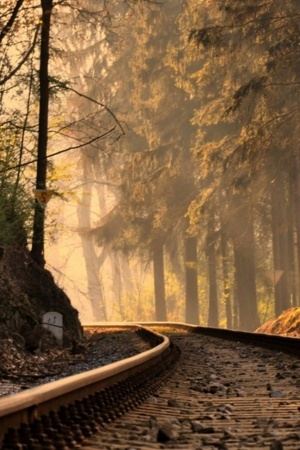 Lovely Morning View Train Track Jungle  Mobile Wallpaper