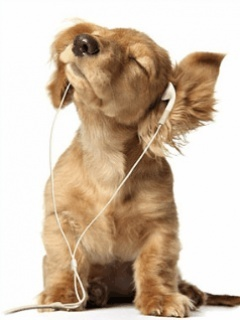 Music Dog Mobile Wallpaper