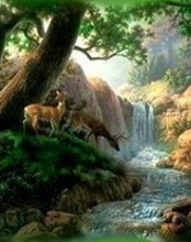 Nature Mobile Wallpaper