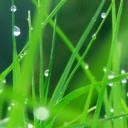 Wet Grass Mobile Wallpaper