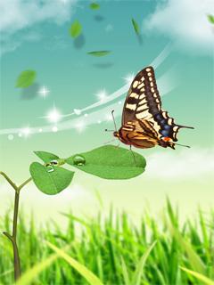 Download Beautiful Butterfly Wallpaper Mobile Wallpaper Mobile Toones