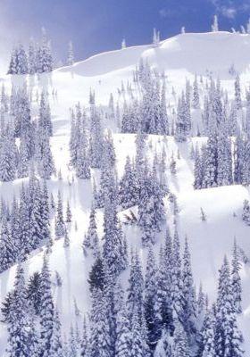 A Comforter Of White Olmpic National Park Washington Mobile Wallpaper