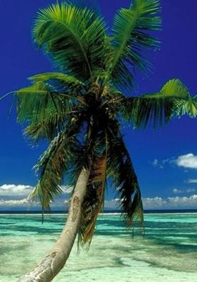 Lone Palm Seychelles Mobile Wallpaper