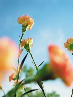 Flower Wallpapers Mobile Wallpaper