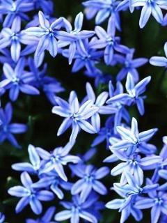 Off White Blue Flower Mobile Wallpaper