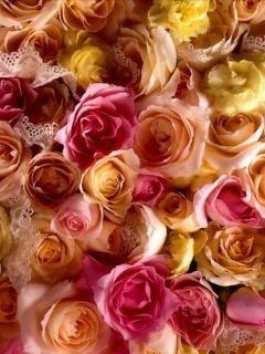 Colorful Roses Mobile Wallpaper