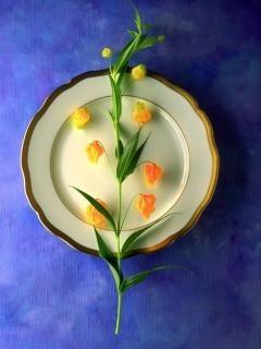 Plate At Little Roses Mobile Wallpaper