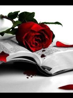 Red Roses For Lover Mobile Wallpaper