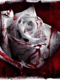 Blood Roses Mobile Wallpaper