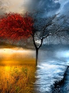 Fall Winter Mobile Wallpaper