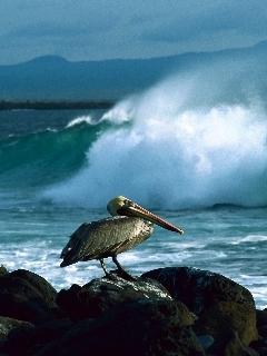 Duck Sit ON Sea Side Mobile Wallpaper