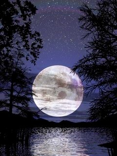 In NIght Moon Mobile Wallpaper