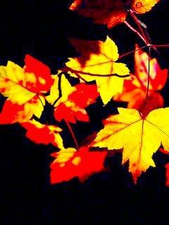 Dark Colors Flowers Mobile Wallpaper