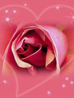 Pink Rose Shining Mobile Wallpaper