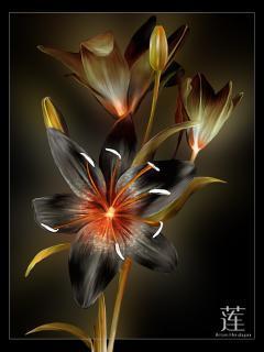 Black Flower Mobile Wallpaper