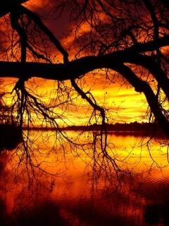 Sunset2 Mobile Wallpaper