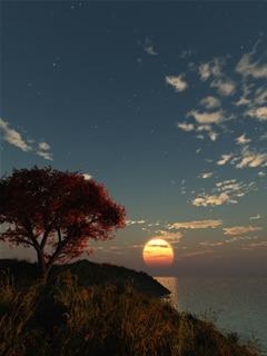 Maple Sunset Mobile Wallpaper