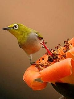 Cute Bird Mobile Wallpaper