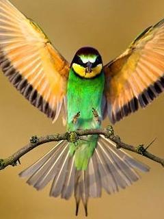 Bird One  Mobile Wallpaper