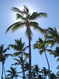 Palm Trees Mobile Wallpaper