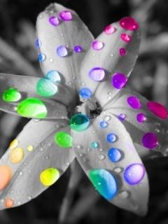 Flower Colorful Drops Mobile Wallpaper