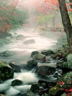 Natural River Mobile Wallpaper