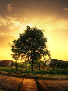 Tree Sunset Mobile Wallpaper