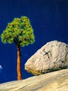 Tree Mobile Wallpaper