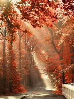Autumnn Mobile Wallpaper