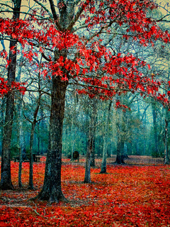 Autumn Color Mobile Wallpaper