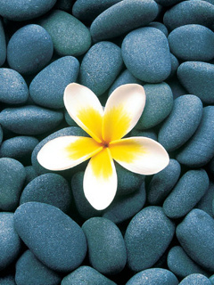 Flower Yelow Mobile Wallpaper