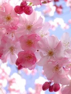 Flower Nice  Mobile Wallpaper