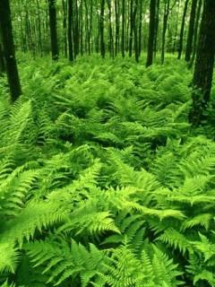 Forest Vista Mobile Wallpaper