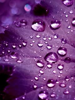 Purple Leafs Drops Mobile Wallpaper