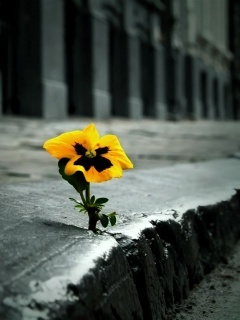 Lonely Flower Mobile Wallpaper