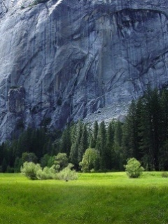 Grass Rock Mobile Wallpaper