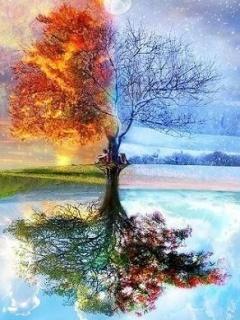 Four Seasons Mobile Wallpaper