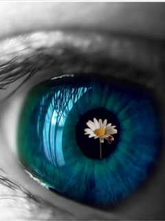 Eye Flower Bug Mobile Wallpaper