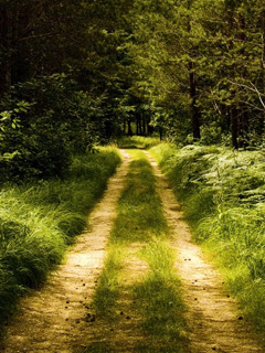 Nice Green Nature And Road Mobile Wallpaper