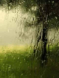 Pretty Raining Mobile Wallpaper