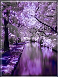 Purple Natures Mobile Wallpaper