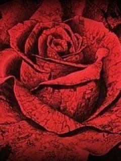 Rosa Mobile Wallpaper
