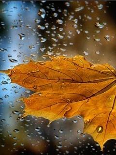Leaves Mobile Wallpaper